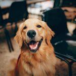 Voor de eerste keer op vakantie met de hond?